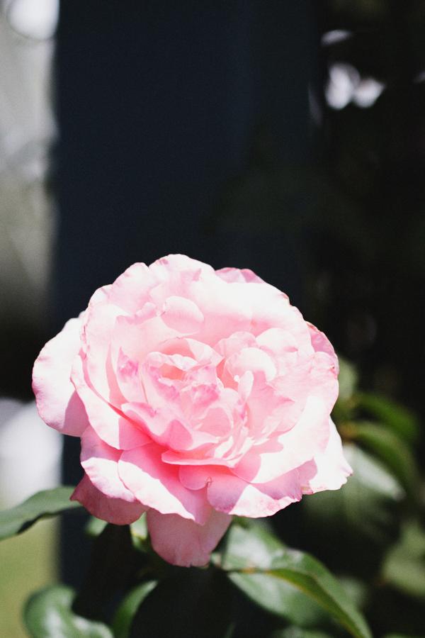 backyard-update-phoenix-garden-blogger-120