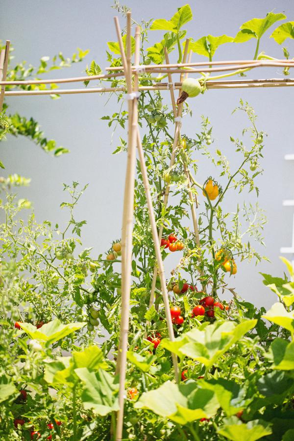 backyard-update-phoenix-garden-blogger-121