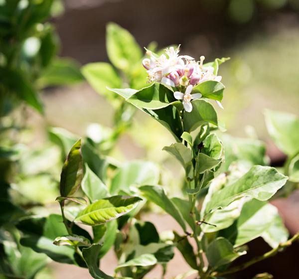 backyard-update-phoenix-garden-blogger-122