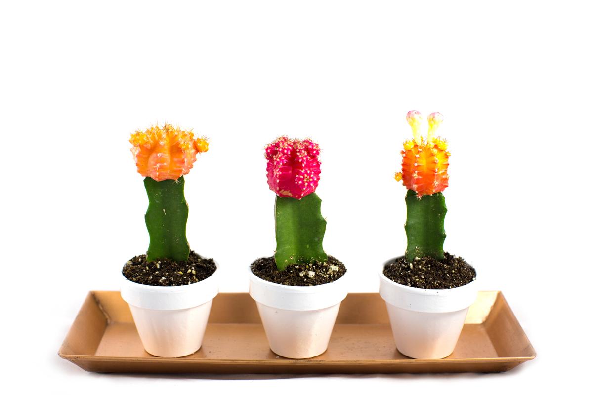neon-cactus-111a
