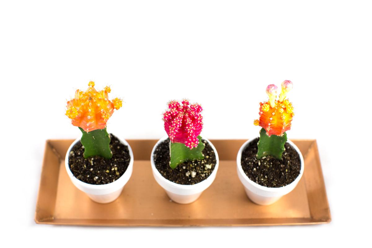 neon-cactus-113a