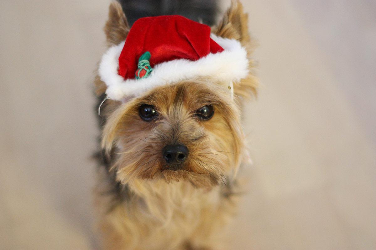 paris-christmas-hat