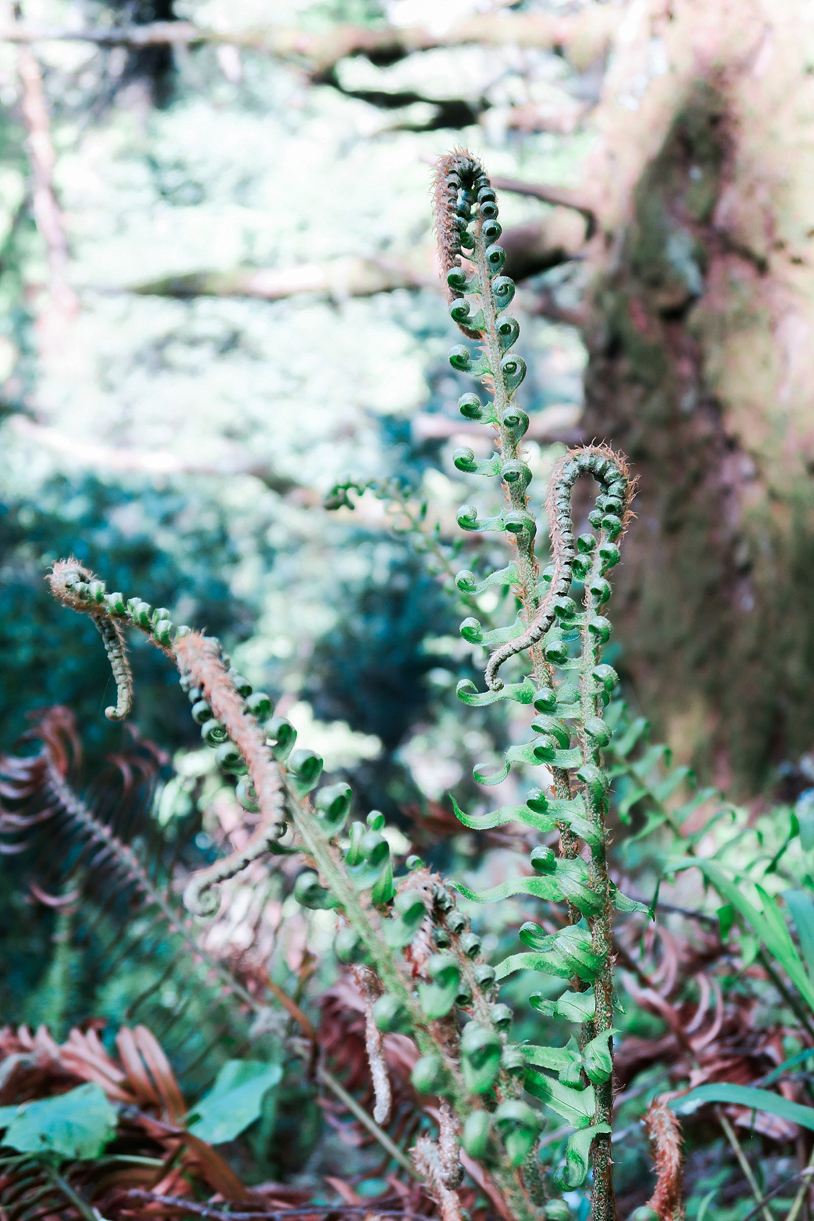 diana-elizabeth-blog-lifestyle-scotts-seed-sun-shade-lawn-games-setup-tutorial-0212