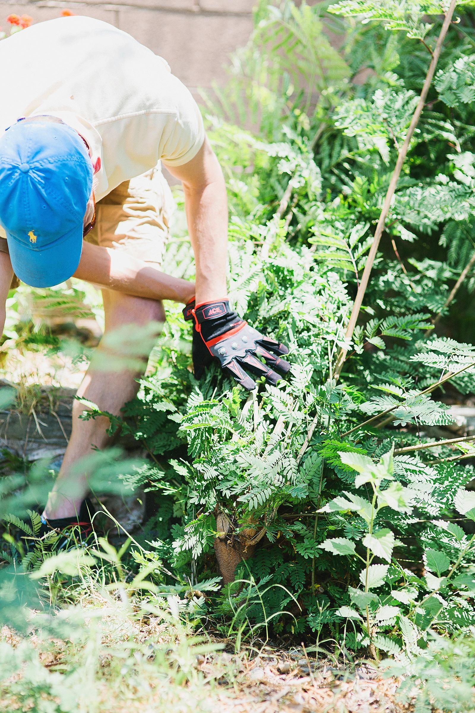 worx-chain-saw-review-gardening-blogger-home-diana-elizabeth-116a