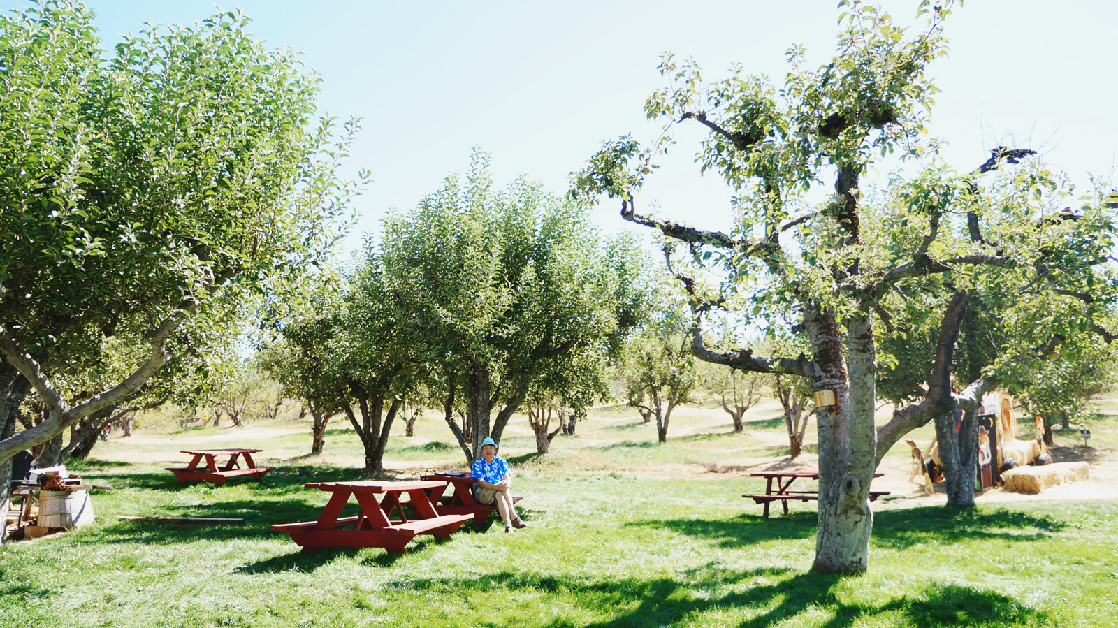 apple-hill-web-picnic-bench