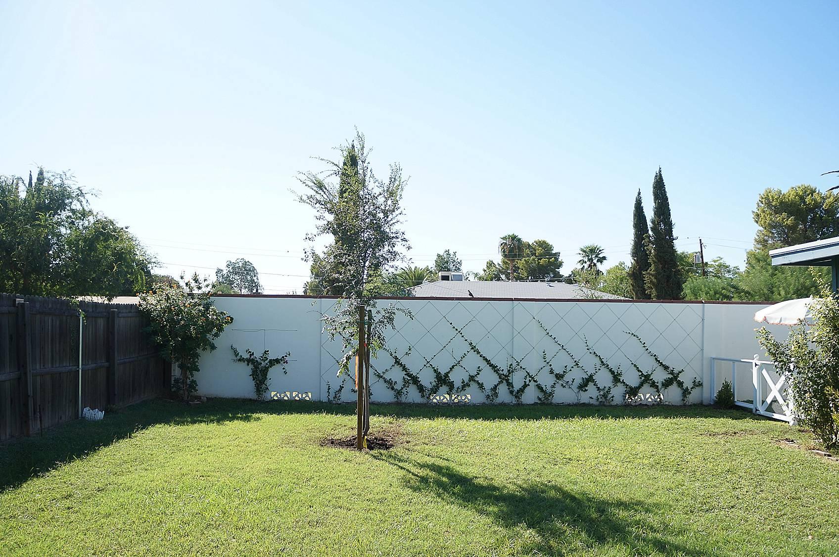 white cinderblock wall with small jasmine training into a trellis diamond pattern