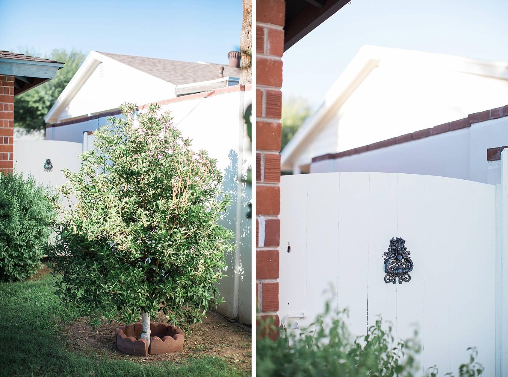 phoenix home garden blogger diana Elizabeth's garden kumquat tree by the white gate