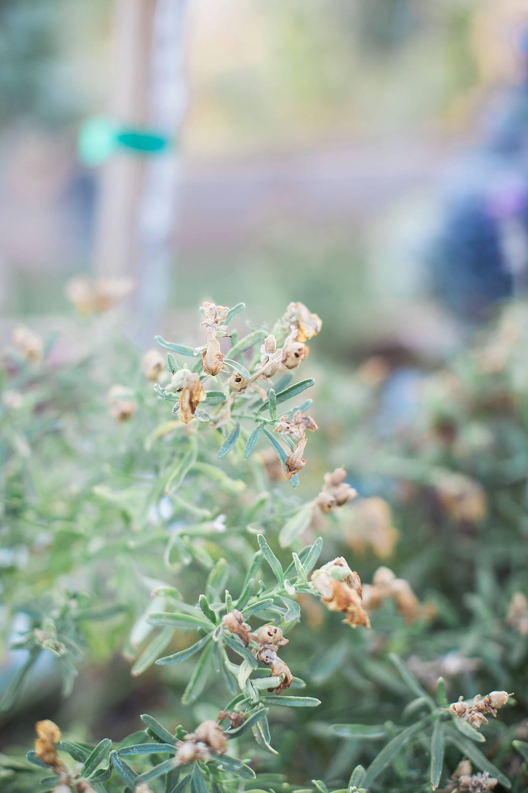 phoenix home garden blogger diana Elizabeth's garden seedlings