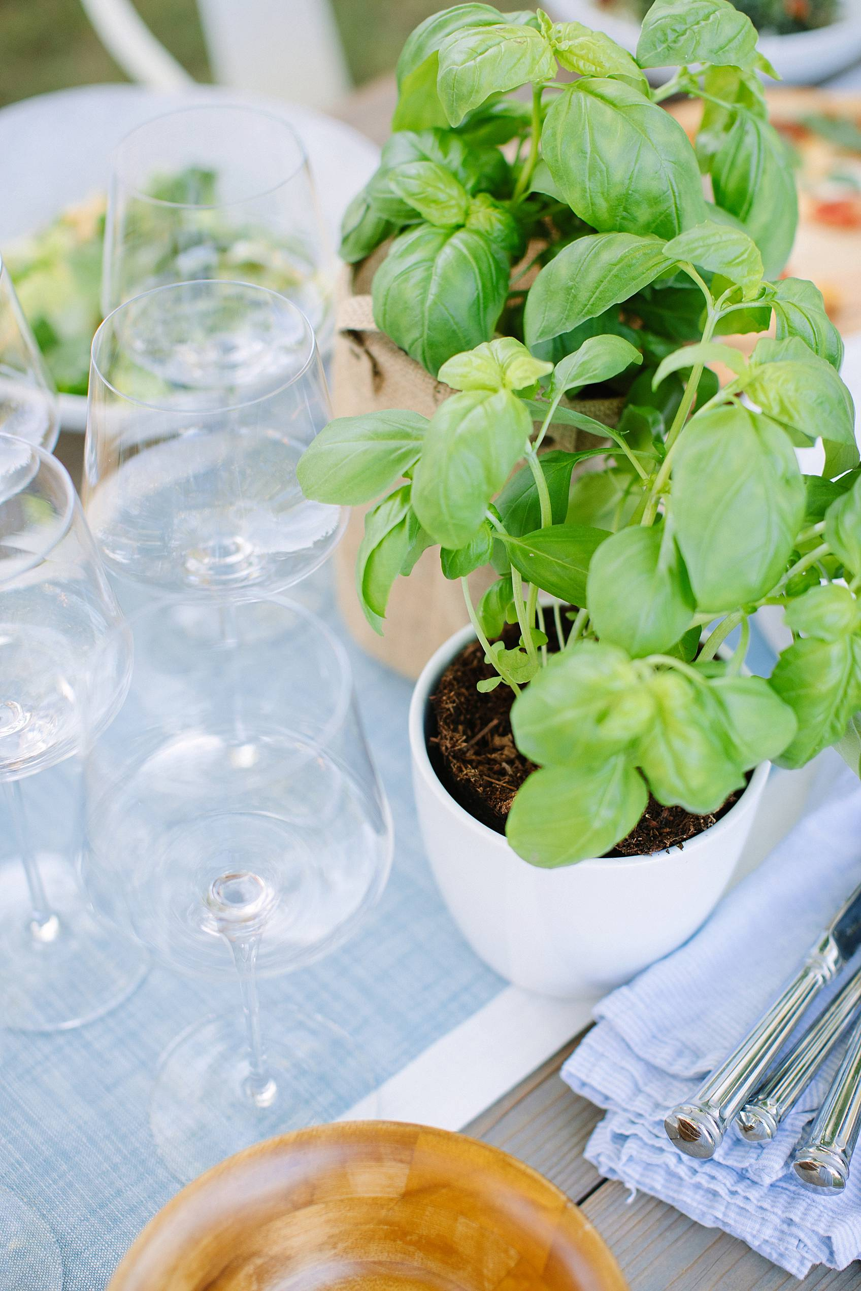basil in pot on table with wine glasses around it
