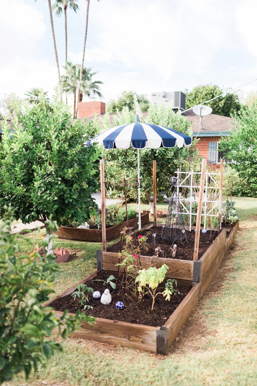 raised garden beds in backyard cute blue umbrella, about fall gardening in phoenix arizona