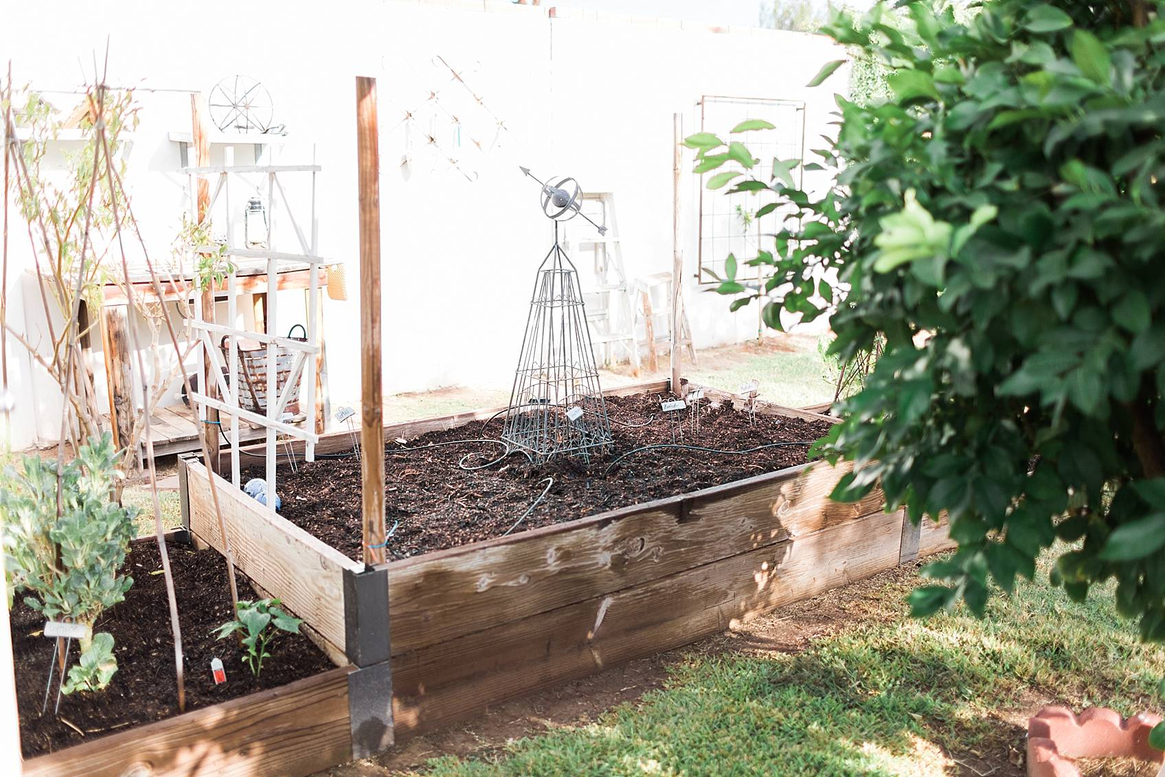 seeded in raised garden beds