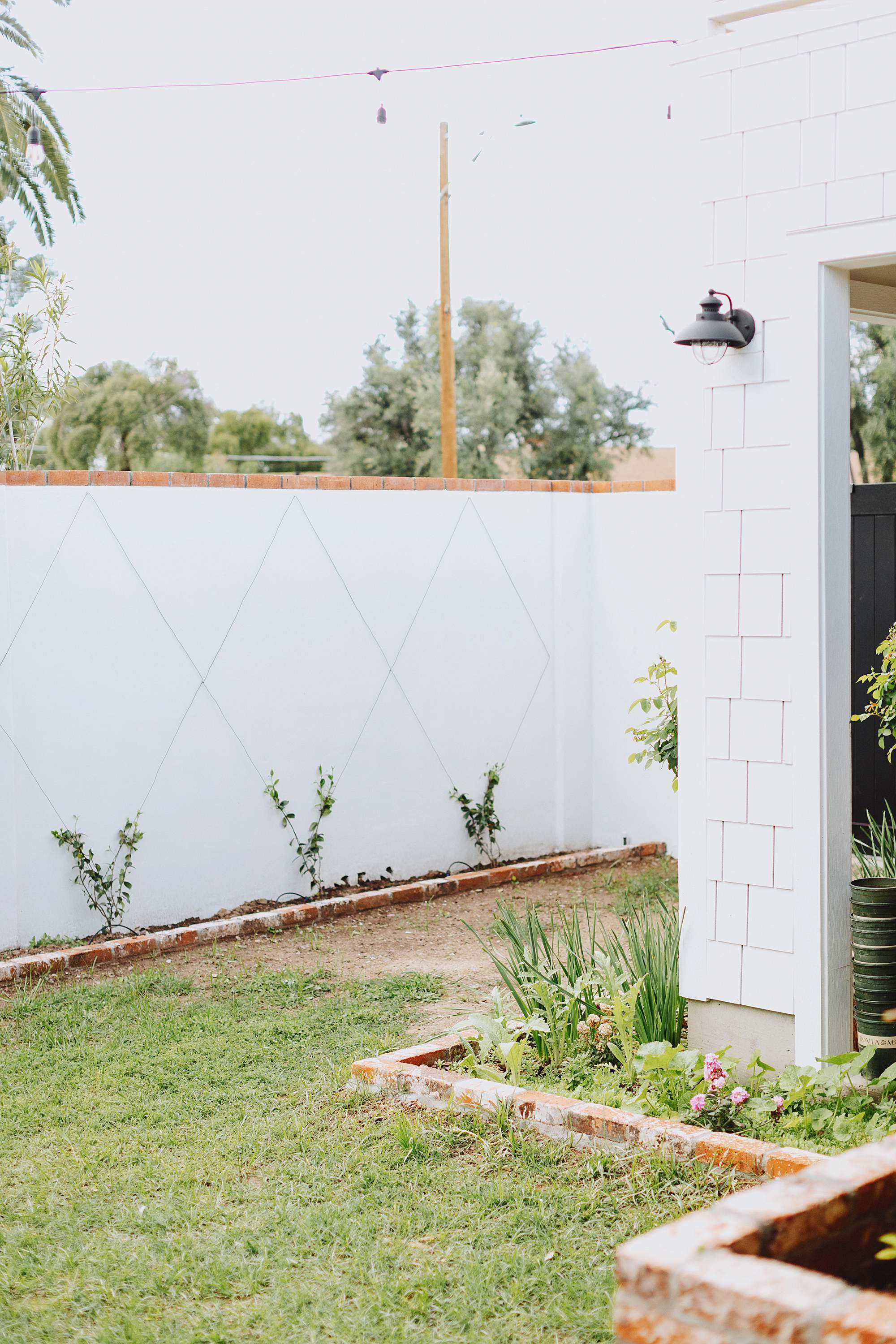vine wall trellis how to