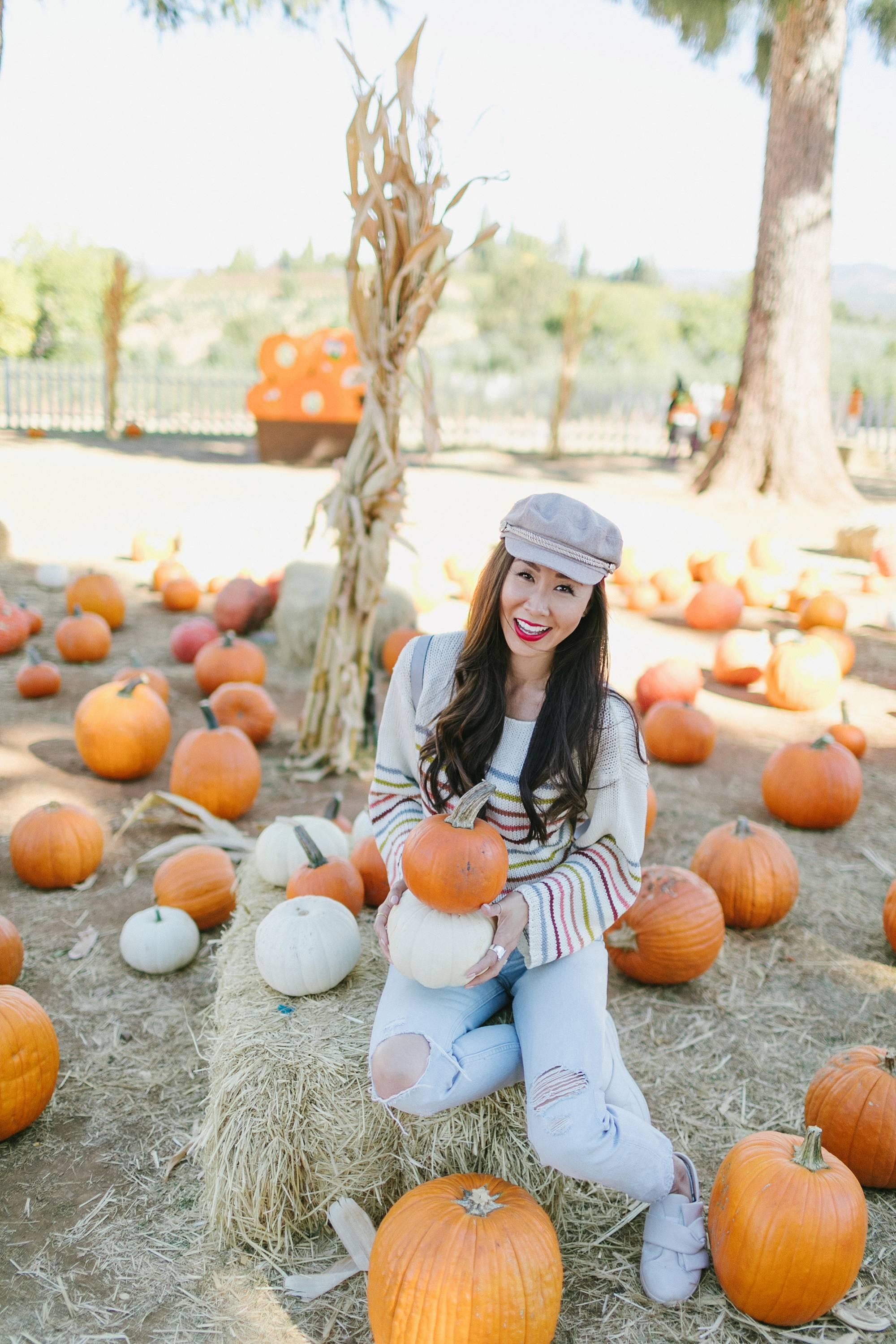 pumpkin patch pumpkins at apple hill