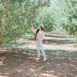 apple hill California in the middle of apple trees
