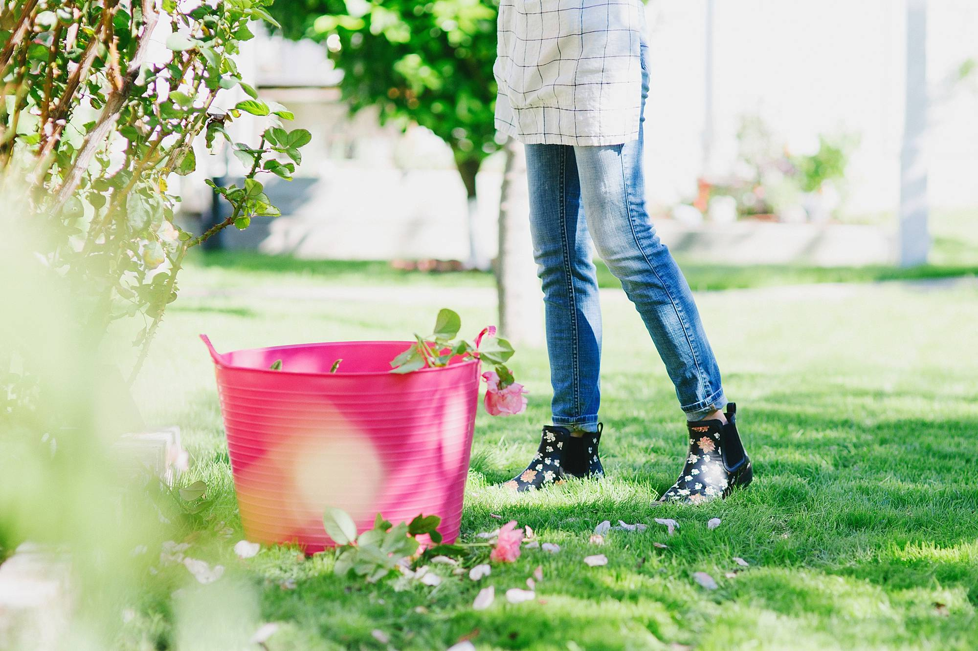 in the garden cutting roses //chai floral leather booties in black FitFlop cute booties and garden booties too with a pink tubtrug