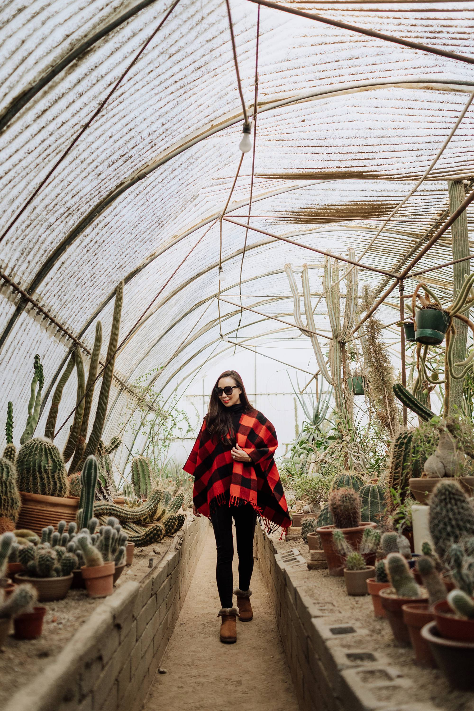 Moorten Botanical Garden Palm Springs cactus garden outdoor buffalo check poncho Abercrombie on phoenix travel and lifestyle blogger Diana Elizabeth wearing cozy shearling boots by FitFlop #cactusgarden #palmsprings #greenhouse