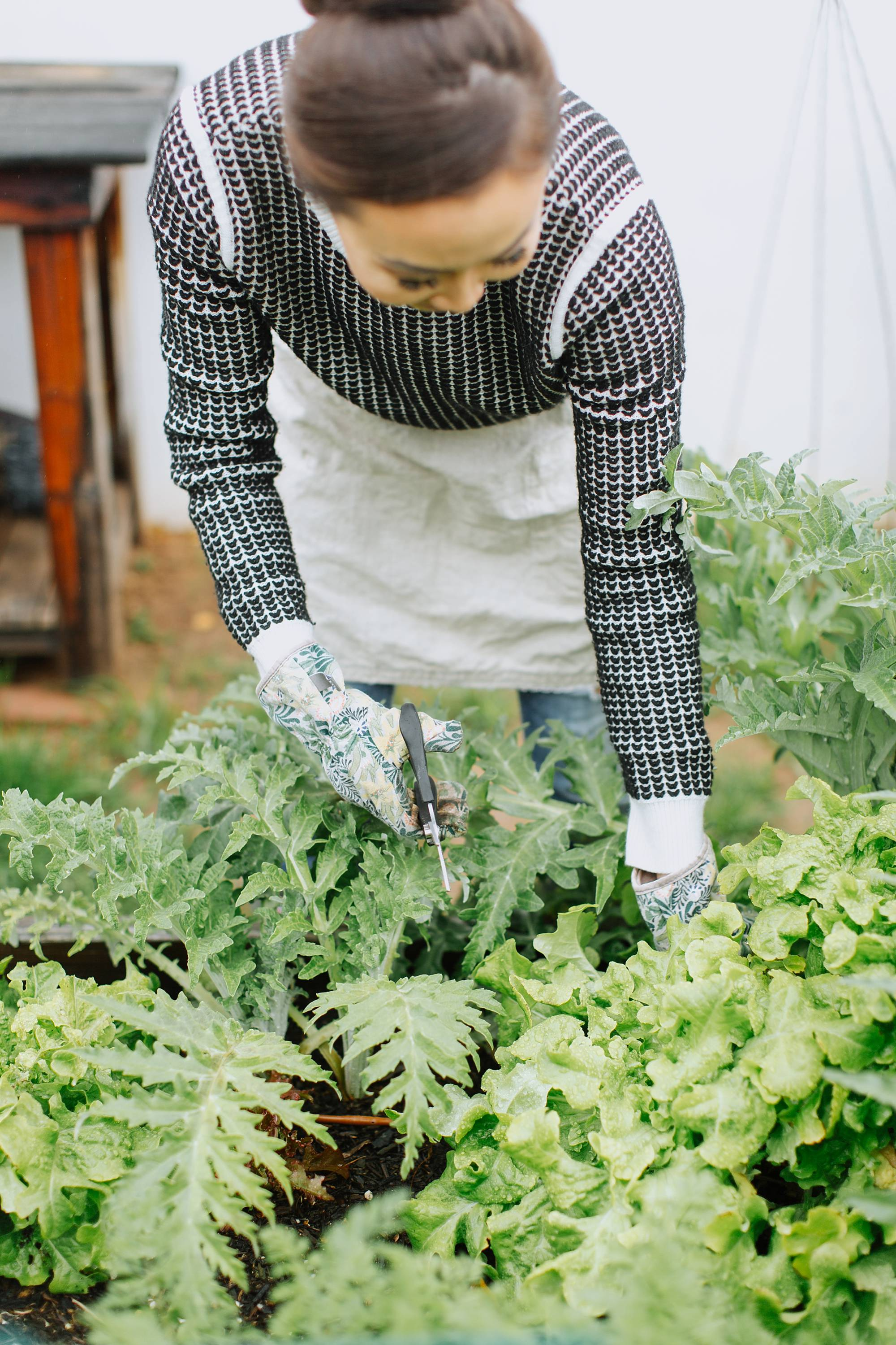 cutting lettuce in the garden beds Diana Elizabeth blog - www.dianaelizabethblog.com #garden #gardenbeds