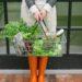winter rainy garden harvest in metal basket. lifestyle blogger Diana Elizabeth blog www.dianaelizabethblog.com