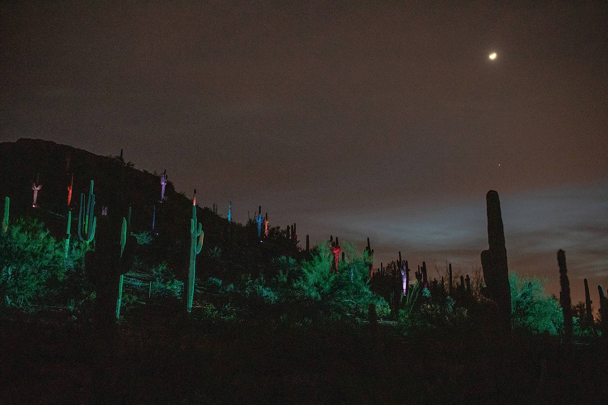 electric desert at desert botanical garden Phoenix Arizona