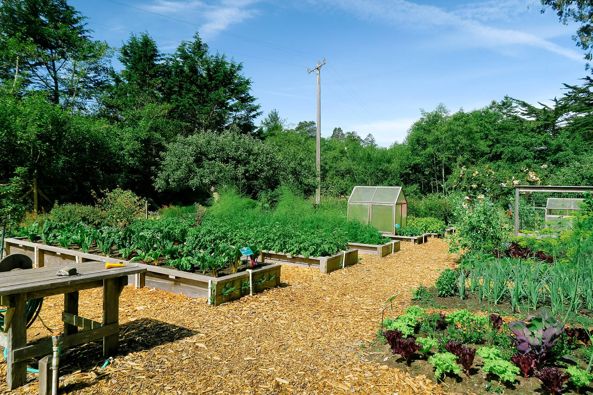 vegetable garden at mendocino county gardens