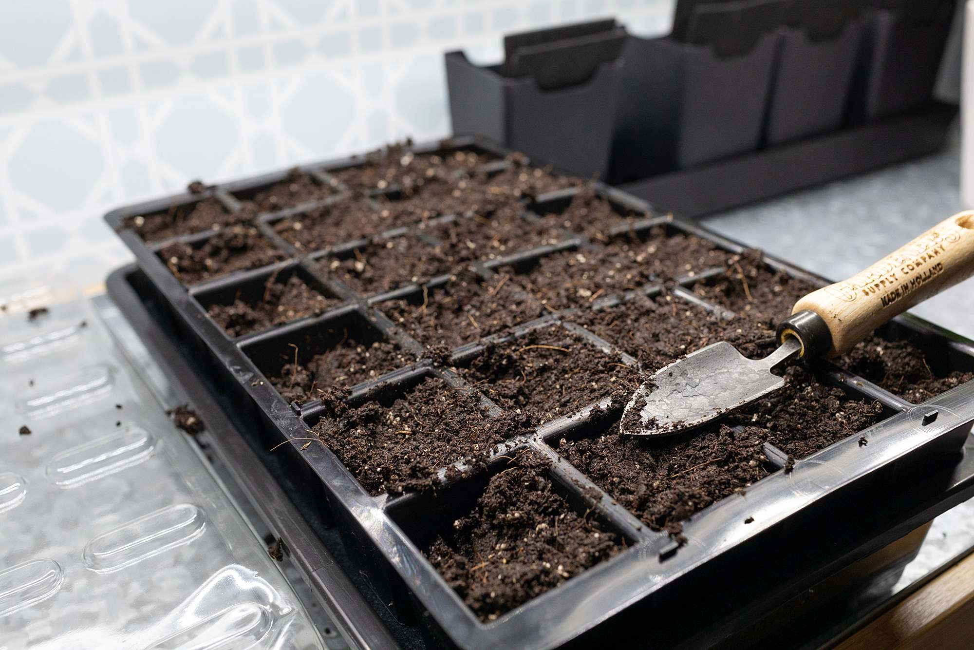 seeding starting