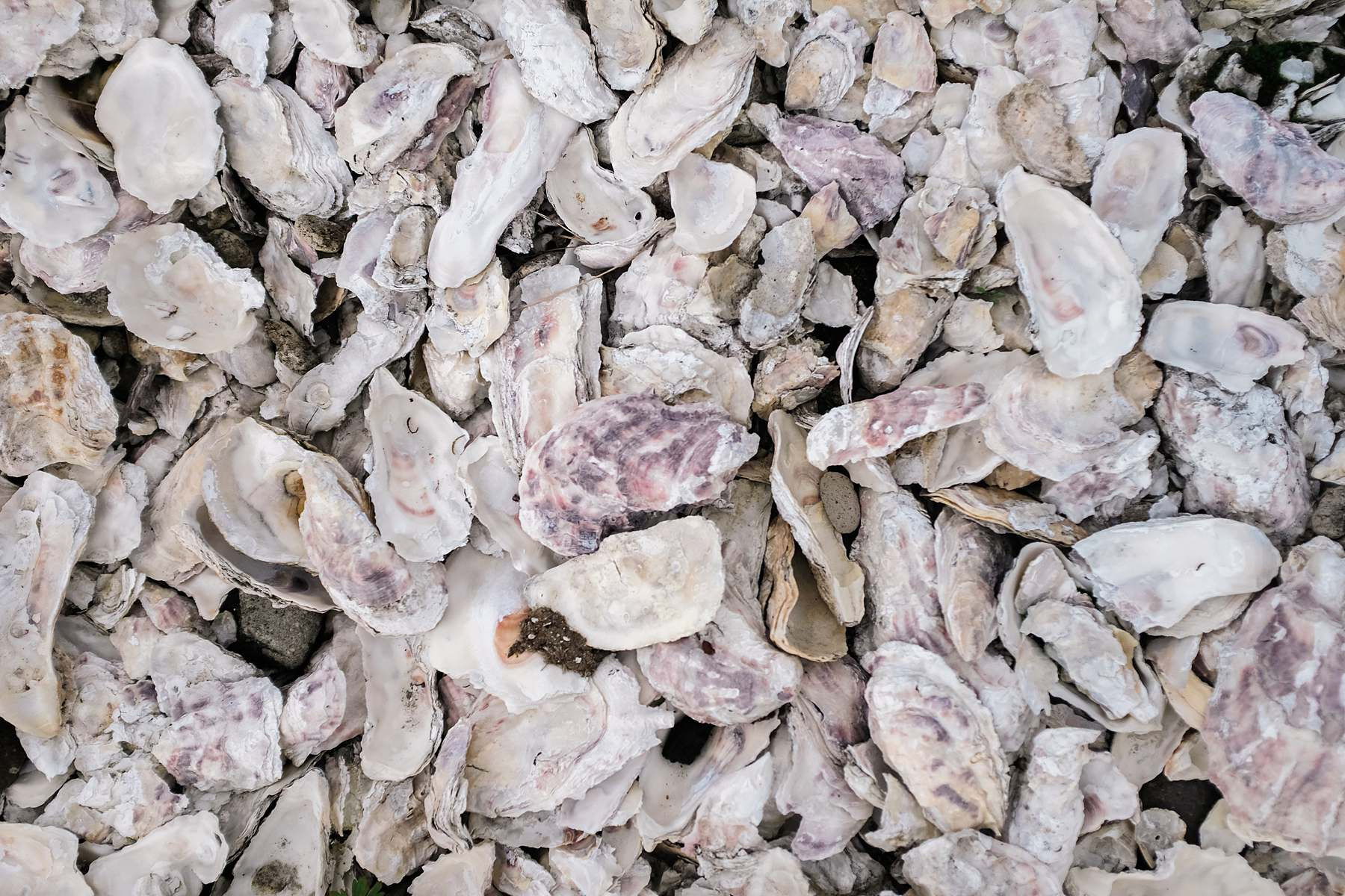 crushed shells for landscaping in Long Beach, Washington