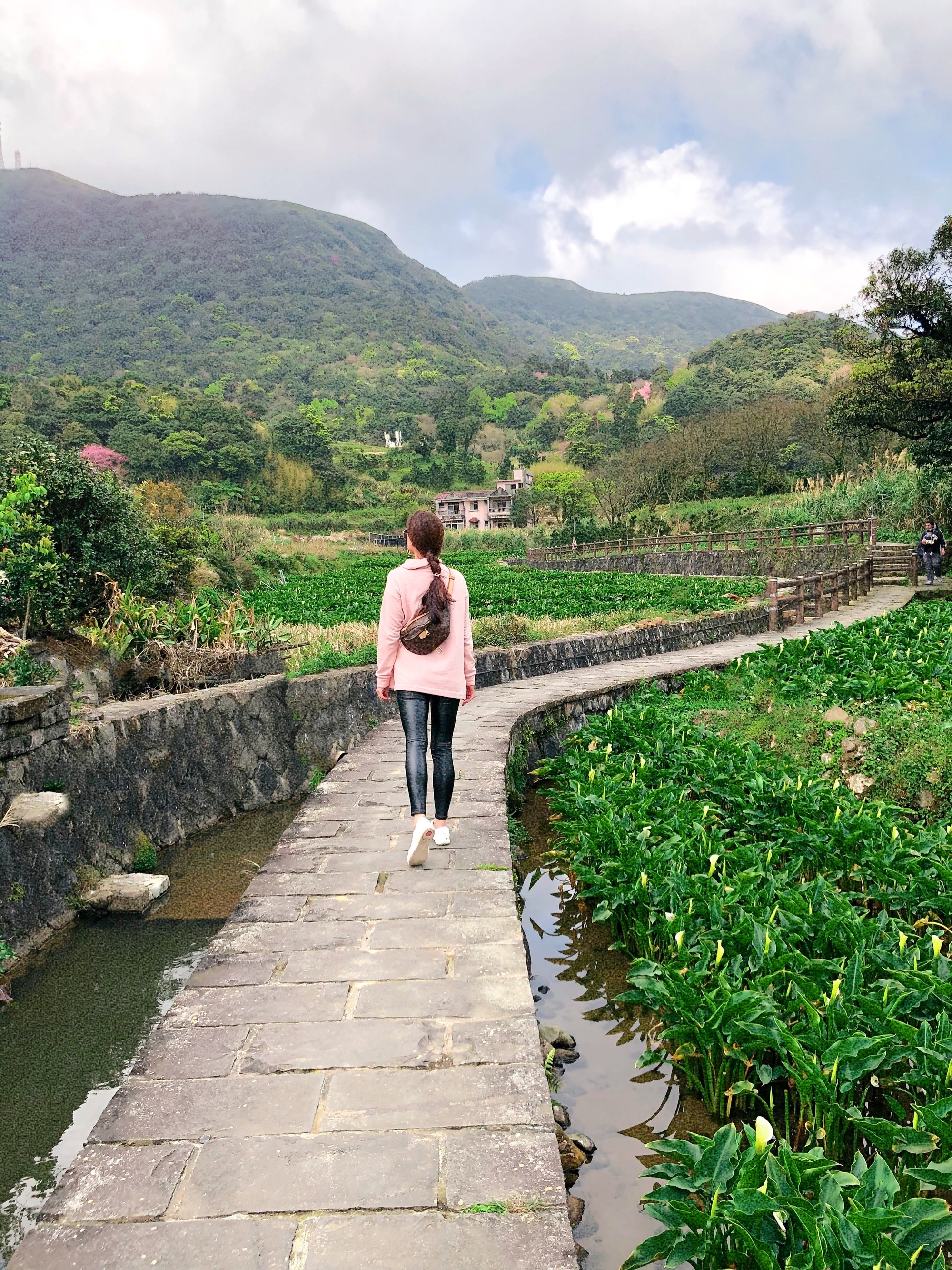 Calla lily field farm in Yangmingshan national park