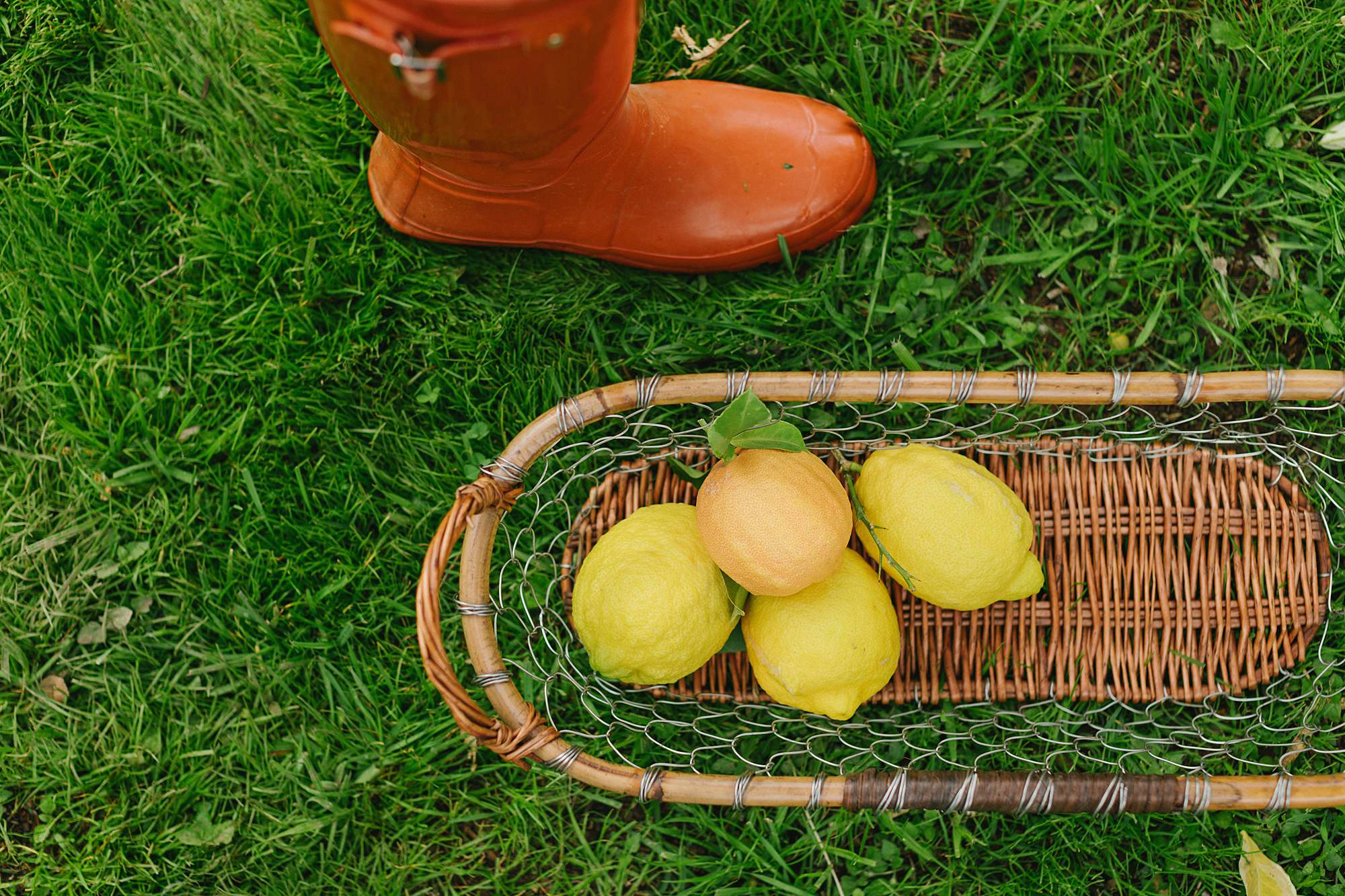 lemons in basket with orange hunter boots / Diana Elizabeth in yellow an white buffalo check top picking citrus in basket // phoenix lifestyle blogger garden arizona home blog