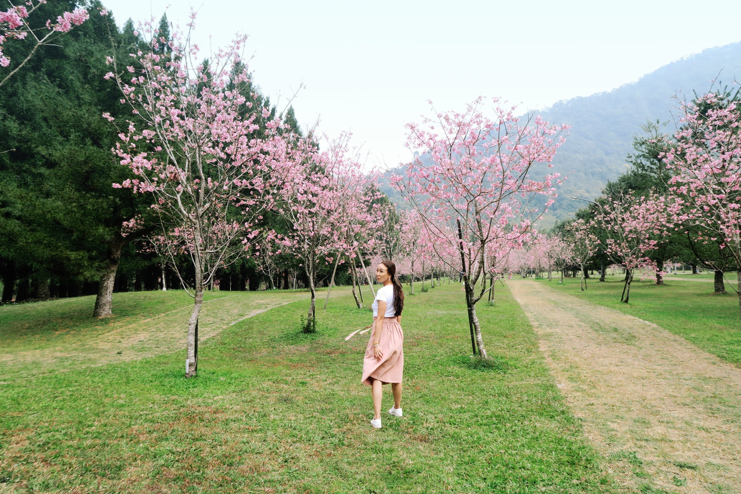 Sakura blossoms in Taiwan at indigenous people theme park on lifestyle blogger Diana Elizabeth