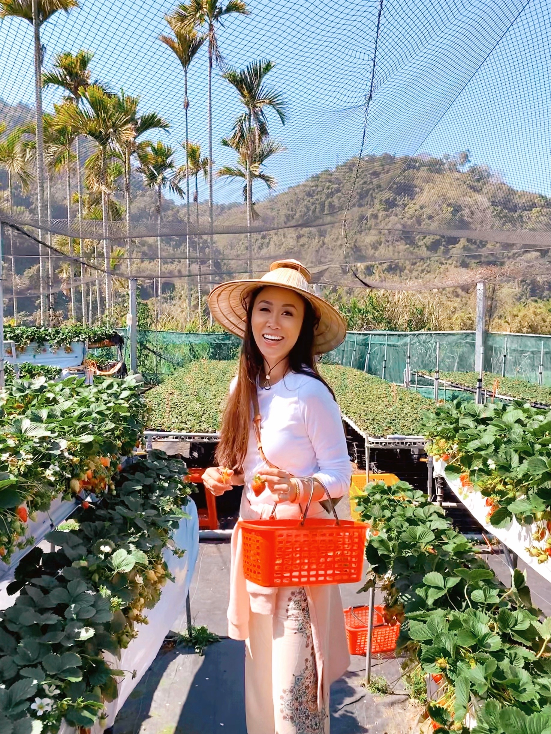 Strawberry picking in a Dahu township Taiwan