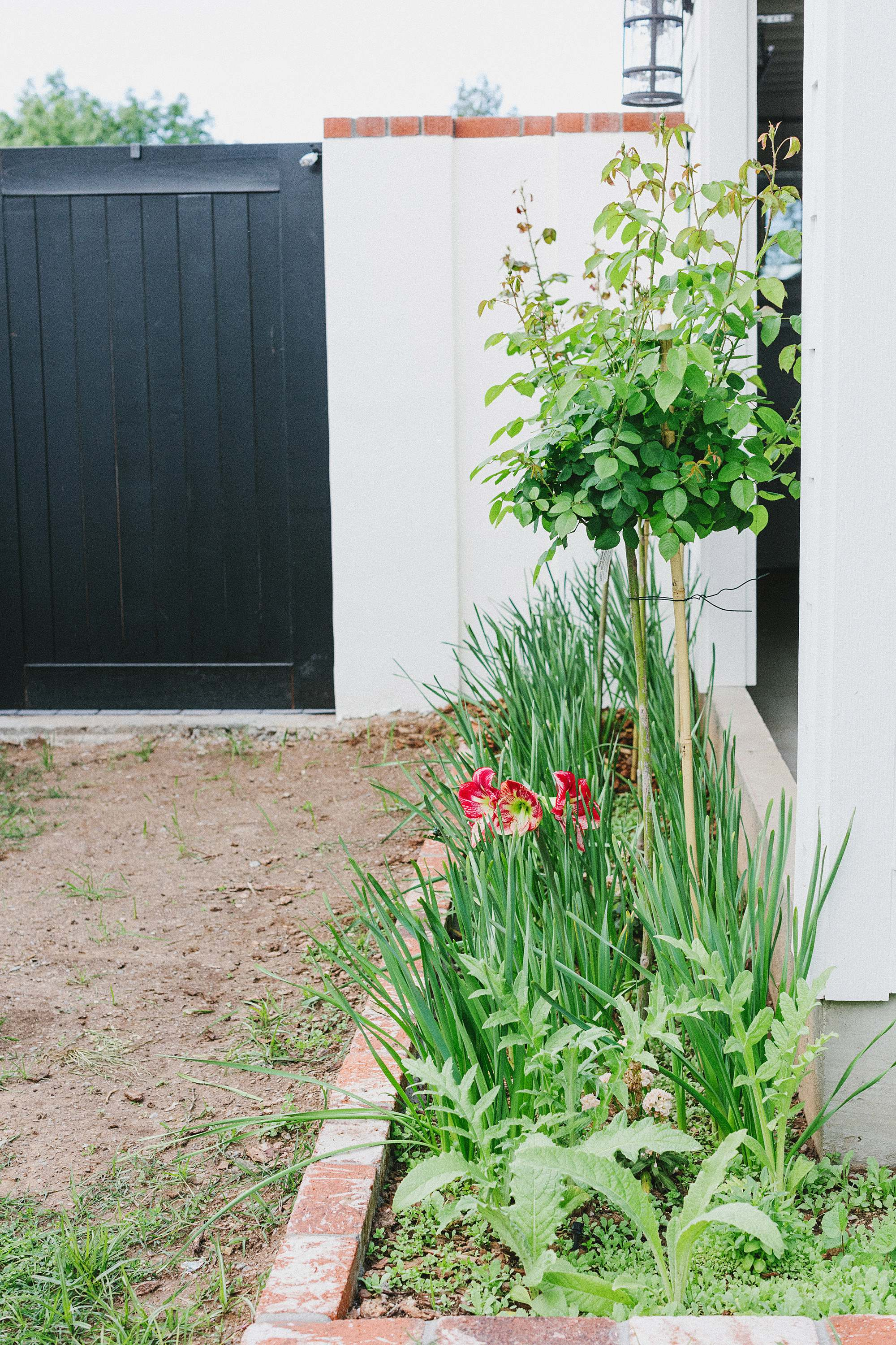 bamboo stakes for rose bushes // Diana Elizabeth blog home and garden blog