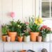 flowers in galvanized and terra-cotta pots on pot planter stand against white toolshed