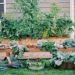 Backyard garden beds with arched trellis for pet, tomatoes, and vegetables. Kitchen Garden Revival book - photography by Eric Kelley