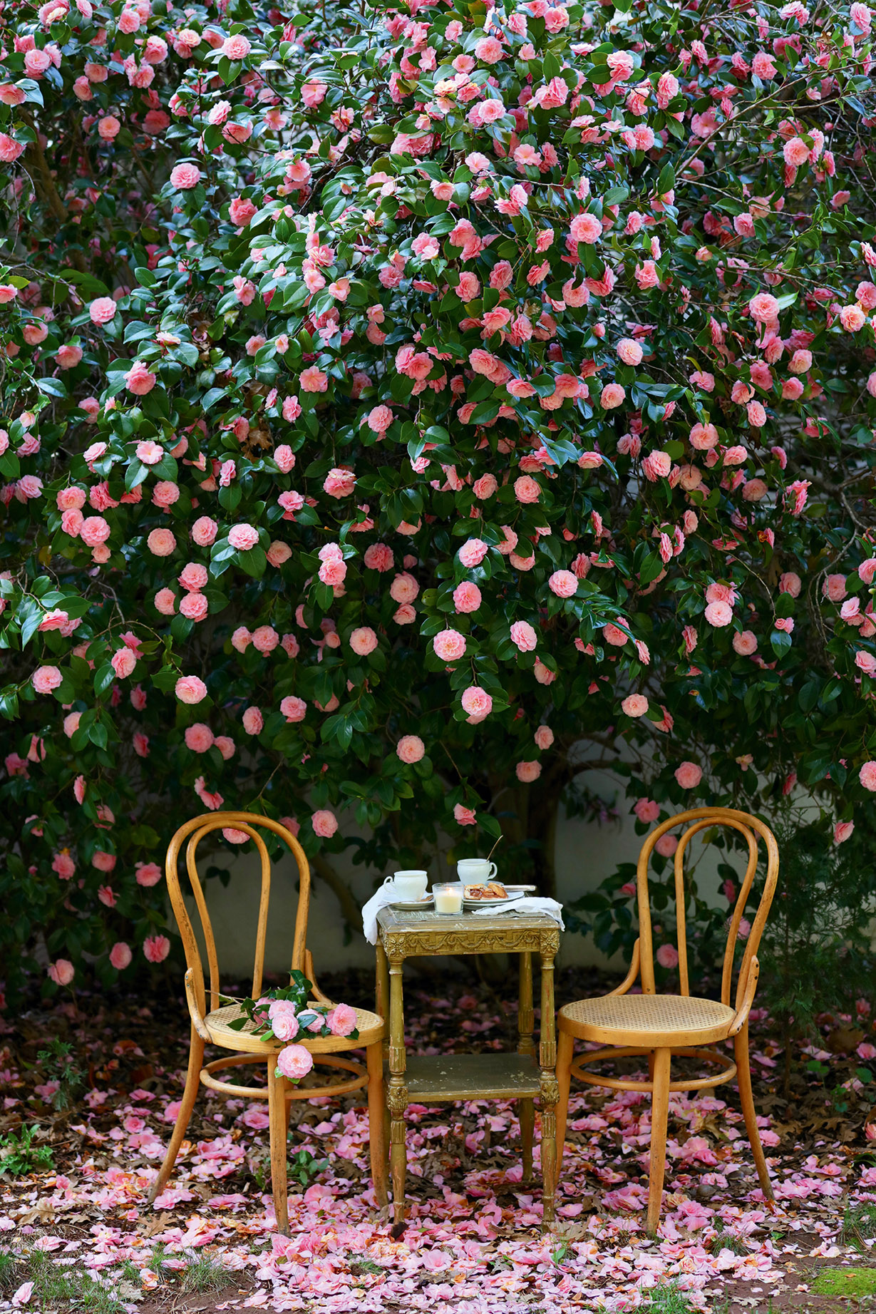 pink flowers under a tree seating for two charcuterie board Photograph from French Country Cottage Inspired Gatherings by Courtney Allison. Reprinted by permission of Gibbs Smith Publishing.
