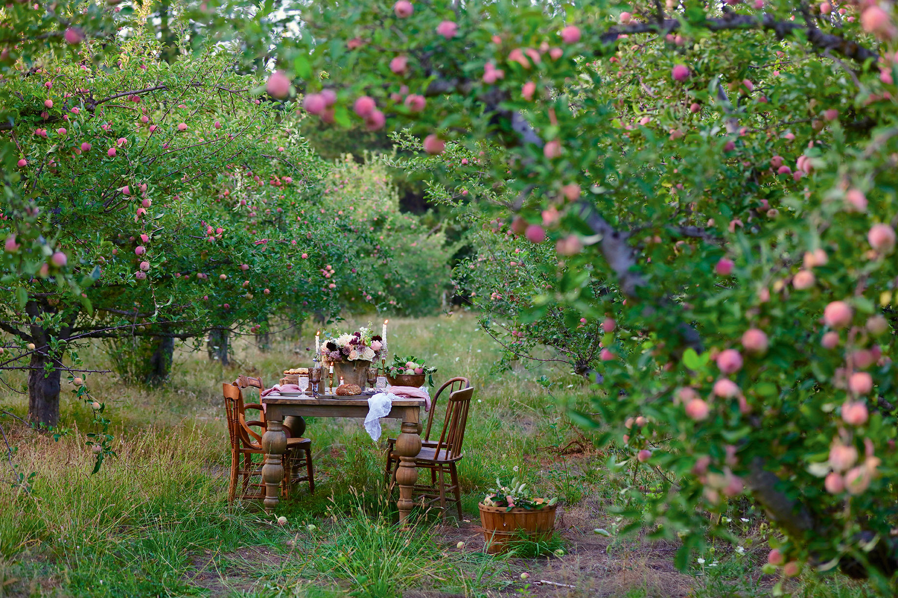 gathering dinner in orchard Photograph from French Country Cottage Inspired Gatherings by Courtney Allison. Reprinted by permission of Gibbs Smith Publishing.