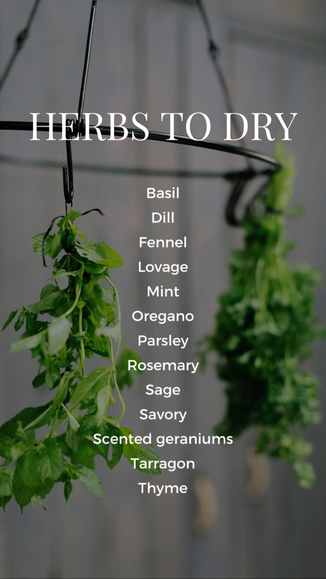 herbs to dry or freeze - a list and the tips - how to keep dust off your drying herbs