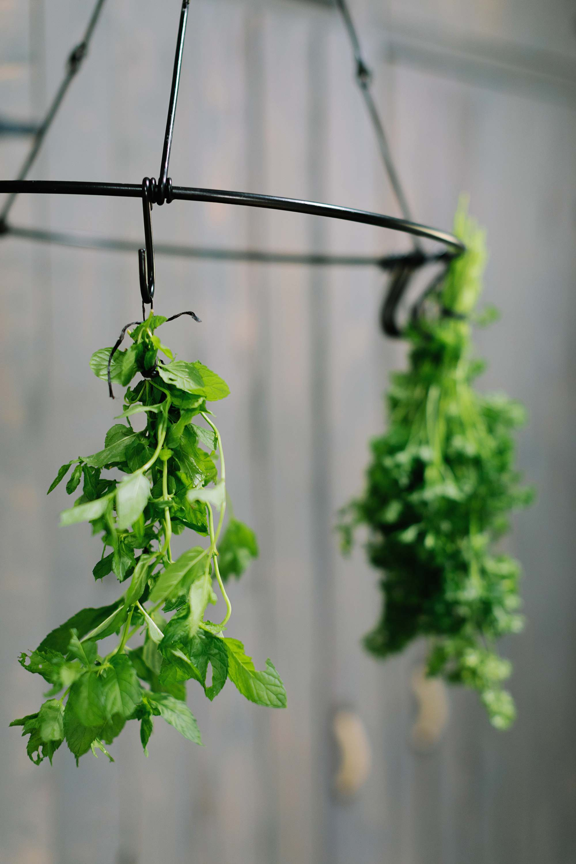 drying herbs on herb drying rack