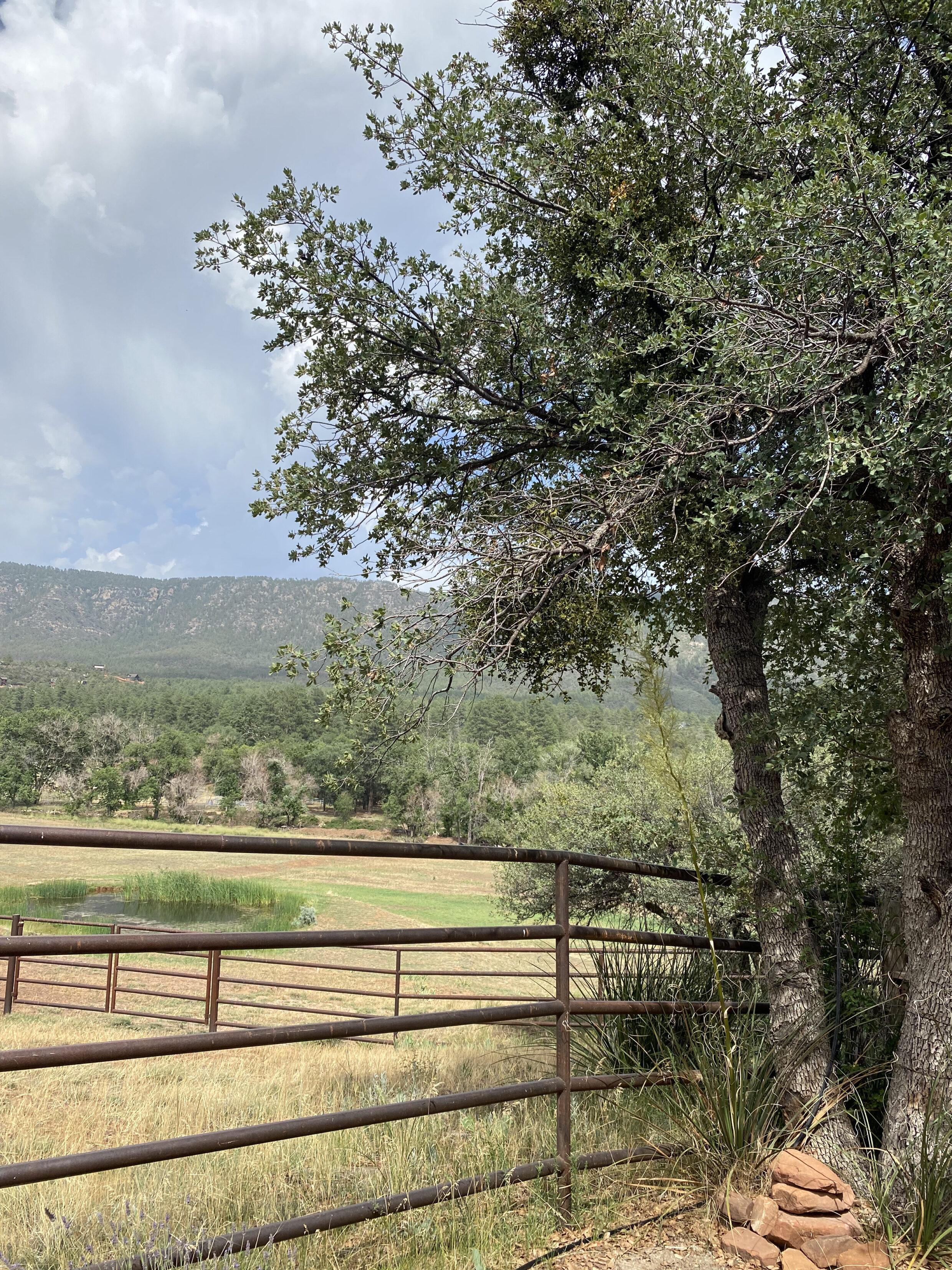 view of pine Arizona