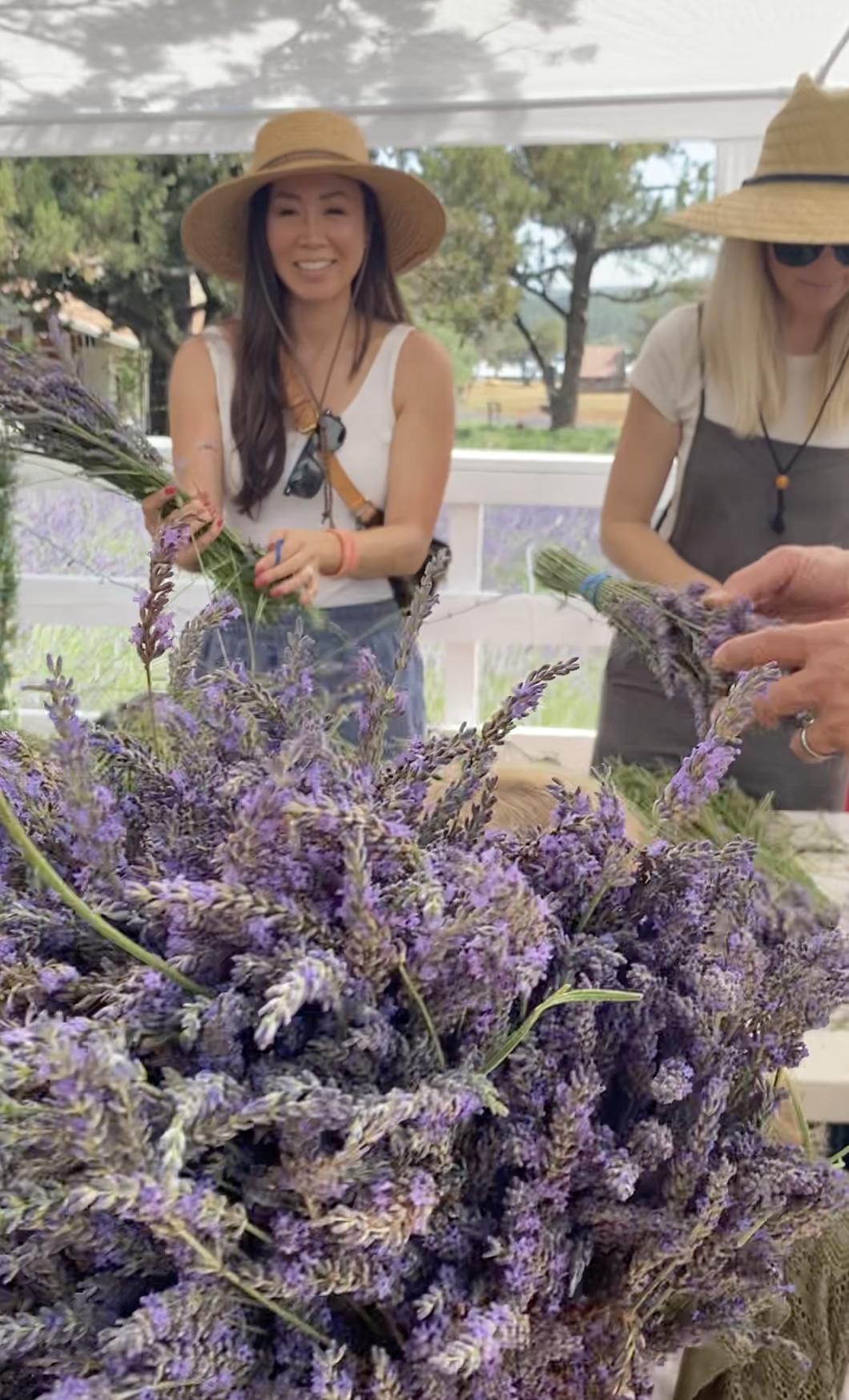 harvesting lavender in pine arizona