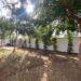 ficus bush hedge newly planted backyard renovation phoenix Arizona brick home